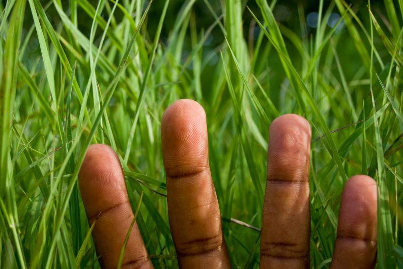 Green Fingers: ESC di 2 mesi in Croazia