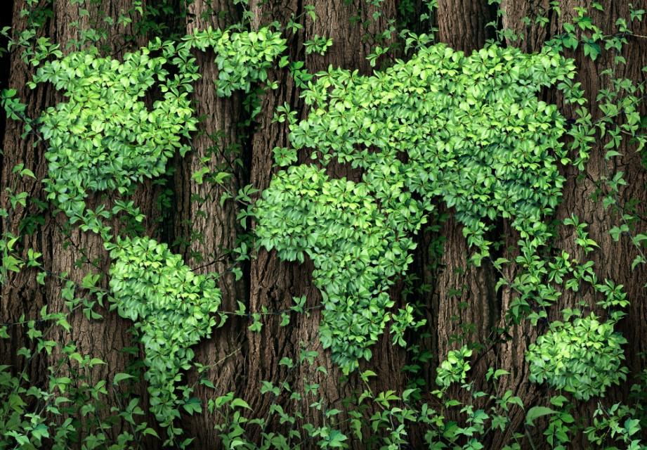 Concorso cinematografico Le Foreste – I polmoni verdi della Terra