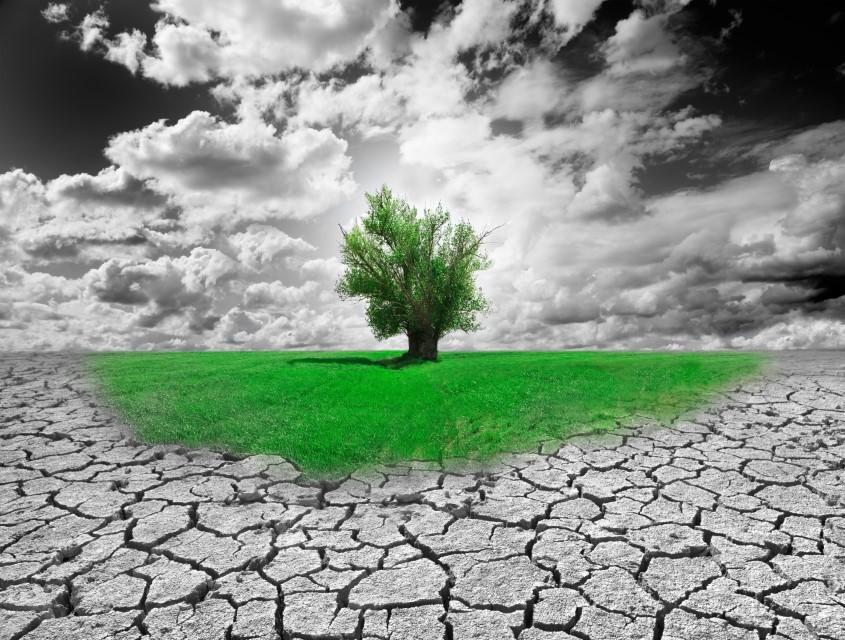 Volontari per Generation Climate Europe