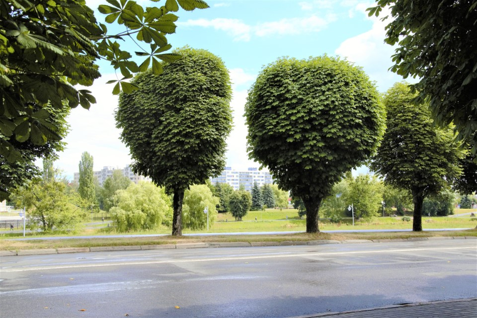"""""""Festa dell'albero"""": giovani per l'ambiente"""