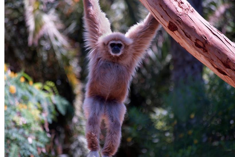 Monkey Business: ESC nei Paesi Bassi in un centro di salvataggio animali