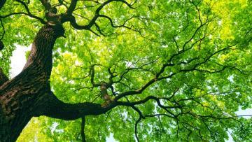 Programma LIFE: promuovere un'Europa verde e