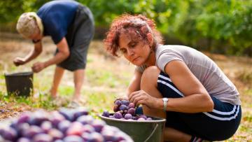 Programma di scambio per giovani agricoltori