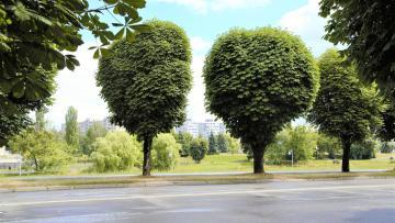 Festa dell'albero 2018-2019