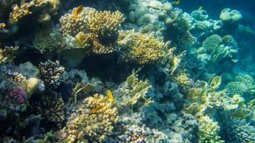 Plastica negli oceani: dati e nuove norme europee